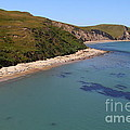 Sunbathing Elephant Seals Along A Beach At Point Reyes California . 7D16058 Print by Wingsdomain Art and Photography