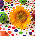 Sunflower and colorful balls Poster by Garry Gay