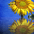 Sunflower Reflection Print by Andee Design