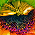 Sunflower Smoothie Print by Gwyn Newcombe