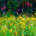 Sunflowers and Grasses Print by Judi Bagwell