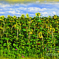 Sunflowers in France Print by Joan  Minchak