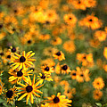 Sunflowers Poster by Michelle Peric
