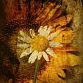 Sunny Antiqued Poster by Tingy Wende