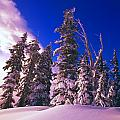 Sunrise Over Snow-covered Pine Trees Print by Natural Selection Craig Tuttle