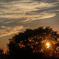 Sunset at the Oasis Print by Joan Carroll