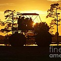 Sunset Buggy Poster by Lynda Dawson-Youngclaus