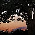 Sunset over a witness tree Print by Dave Sandt