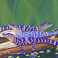 Swamp Babies Print by Tracy L Teeter