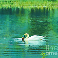 Swan Lake Print by Judi Bagwell
