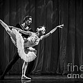 Swan Lake  White Adagio  Russia 3 Poster by Clare Bambers