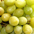 Sweet Green Grapes Poster by Barbara Griffin