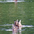 Synchronized Ducking Print by Chris Anderson