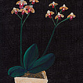 Table Orchid Print by Jose Valeriano