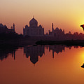 Taj Mahal & Silhouetted Camel & Reflection In Yamuna River At Sunset Poster by Richard I'Anson