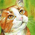 Tan and White Domestic Cat Poster by Cherilynn Wood