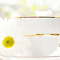 Teacup Filled with Sunshine Poster by Kim Fearheiley