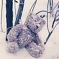 teddy in snow Poster by Joana Kruse