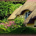 Thatched Cottage with Pink Flowers Poster by Carla Parris
