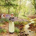 The Bluebell Glade Print by Ernest Walbourn