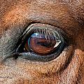 The Equine Eye Print by Terry Kirkland Cook