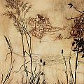 The Fairy's Tightrope from Peter Pan in Kensington Gardens Print by Arthur Rackham