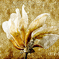 The Golden Magnolia Print by Andee Photography