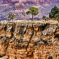 The Grand Canyon IV Print by Tom Prendergast