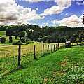 The Green Green Grass of Home Poster by Kaye Menner