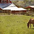 The Horse In The Barn Yard Print by Kathy Jennings