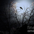 The Night The Raven Appeared In My Dream . 7D12631 Poster by Wingsdomain Art and Photography