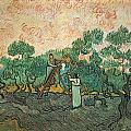 The Olive Pickers Poster by Vincent van Gogh