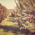 The Orchard Print by Lisa Russo