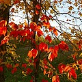 The Reds of Autumn Print by Julie Dant