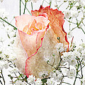 The Rose Print by Andee Photography
