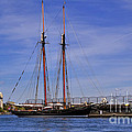 The tall ship Pacific Grace based in Victoria Canada Print by Louise Heusinkveld