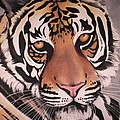 The Tiger Poster by Annie Seddon