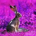 The Tortoise and the Hare . Magenta Square Poster by Wingsdomain Art and Photography