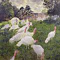 The Turkeys at the Chateau de Rottembourg Print by Claude Monet