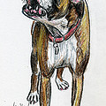 This Boxer Can Sing Print by Deborah Willard