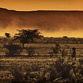This is Namibia No. 12 - Walking The Desert Poster by Paul W Sharpe Aka Wizard of Wonders