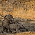 This is Namibia No.  4 - Come on Bro I Wanna Play Print by Paul W Sharpe Aka Wizard of Wonders