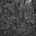 Thoreau Woods Black and White Poster by LAWRENCE CHRISTOPHER