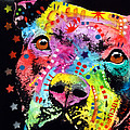 Thoughtful Pitbull i heart u Print by Dean Russo