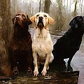Three Labs Print by Robert Smith