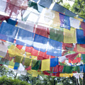 Tibetan Buddhist Prayer Flags Print by Glen Allison