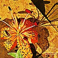 Tiger Lily Still Life  Print by Chris Berry