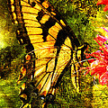 Tiger Swallowtail Butterfly Happily Feeds Print by J Larry Walker