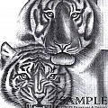 TIGERS Poster by Rick Hill