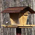 Titmouse Feeding by Douglas Barnett